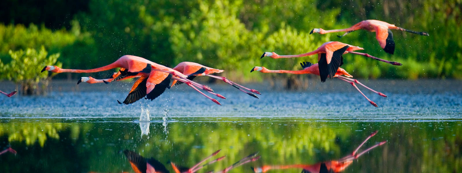 Flamingos in Rio Lagartos, Mexiko