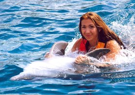 Swim with Dolphins DT Traveller Akumal Mexico Online Booking